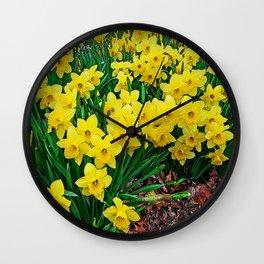 Daffodiles Wall Clock