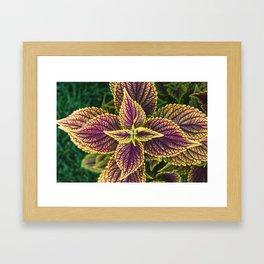 Plant Patterns - Coleus Colors Framed Art Print