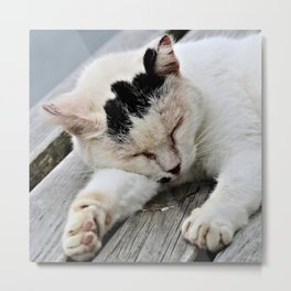 Cat Dreaming Metal Print