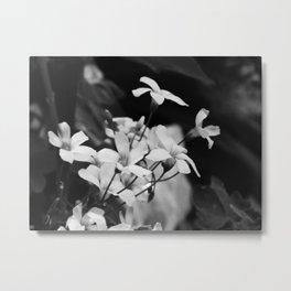 Gaggle of flowers Metal Print