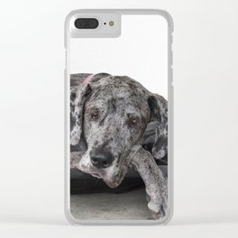 Great Dane waiting Clear iPhone Case