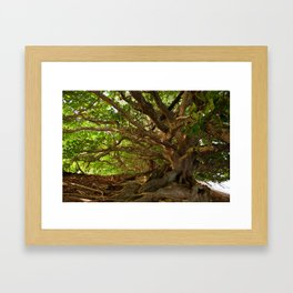 Branches And Roots Framed Art Print