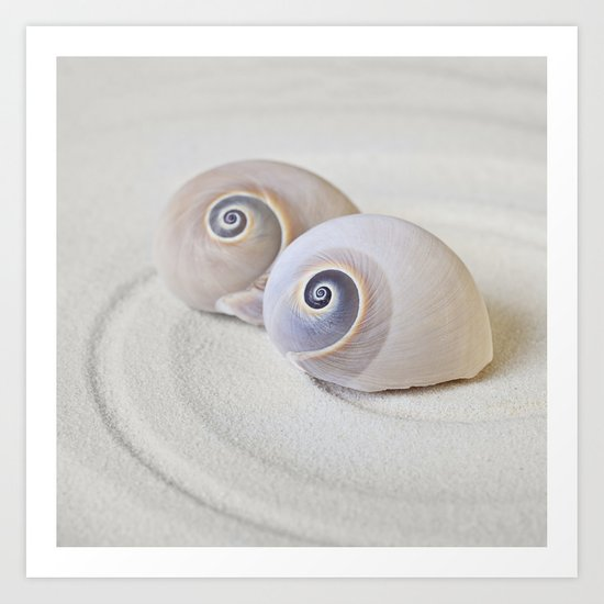 Zen Shell Harmony Still Life Art Print
