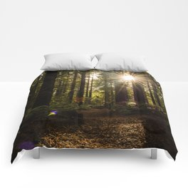 Redwood Forest Comforters