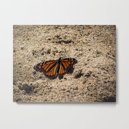 Beachy Butterfly Metal Print