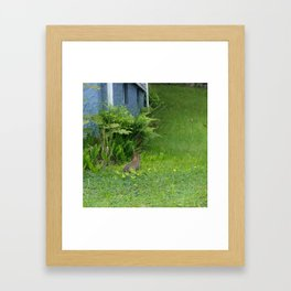 Guest in the Yard Framed Art Print