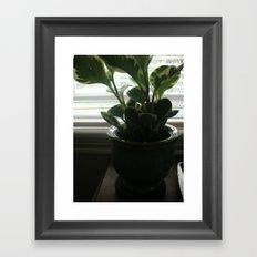 House Plant Framed Art Print
