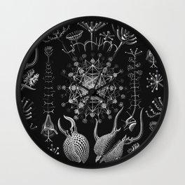 Ernst Haeckel - Phaeodaria Wall Clock