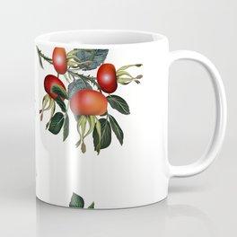 Rose hip, realsitic botanical illustration vector Coffee Mug