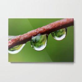 Dew Drops Metal Print