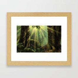 Sunbeams in forest Framed Art Print