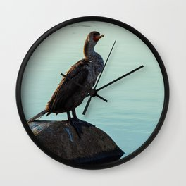 Pelagic Cormorant 1 Wall Clock