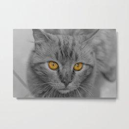 Gray Kitten with Yellow Eyes Metal Print