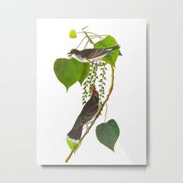 Tyrant Fly-catcher Bird Metal Print