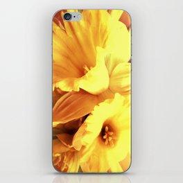 Daffodils In Spring iPhone Skin