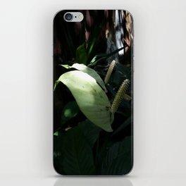 """Spathiphyllum cannifolium - """"pride"""" by Chris Kabbalah iPhone Skin"""