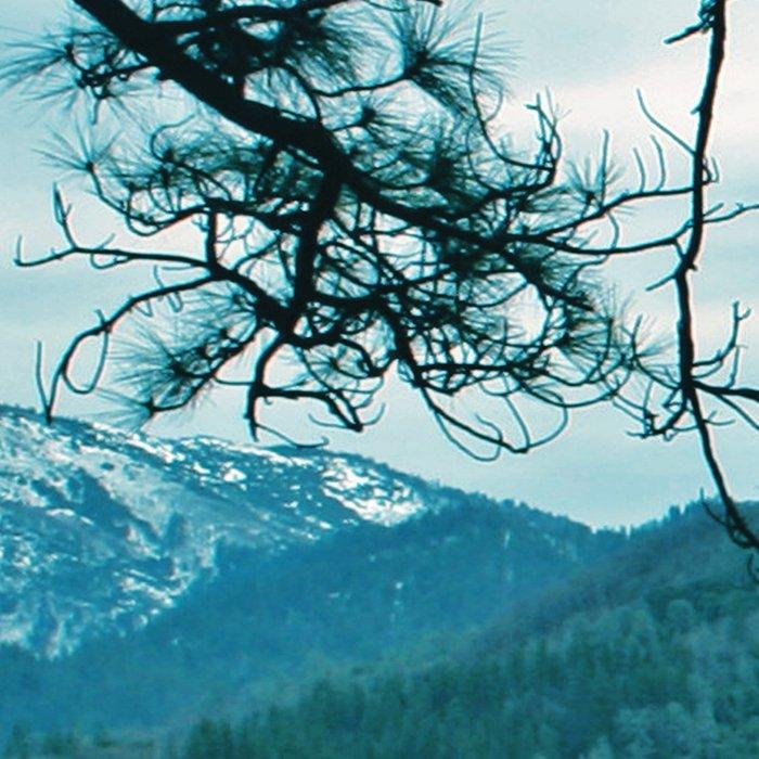 Lake Shasta Beauty Leggings