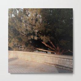 Shadow Tree 3 Metal Print