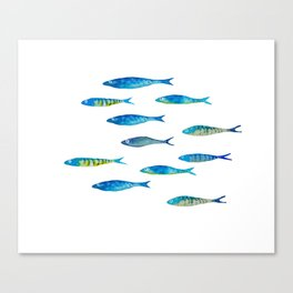 tropical minnows Canvas Print