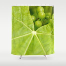 Maturing wine grapes Shower Curtain