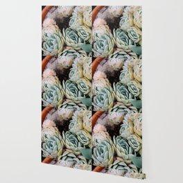 California Potted Succulents Wallpaper