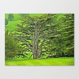 Old English Tree Canvas Print
