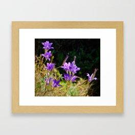 Sierra Nevada Wildflowers Framed Art Print