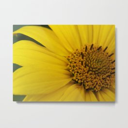 Burst of Yellow Metal Print