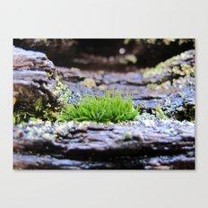 Rainforest No.5 Canvas Print