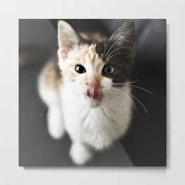 Kitty Noms Metal Print