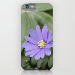 Anemone Blanda | Flowers | Spring | Botanical | Photography iPhone Case