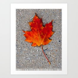 The Maple Leaf Art Print