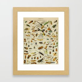 Insects Vintage Scientific Illustration French Language Encyclopedia Lithographs Educational Framed Art Print