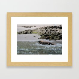 Wading Komodo Dragon Framed Art Print