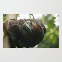 Kaka : New Zealand Endemic Rug