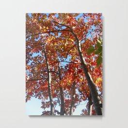 change of season Metal Print