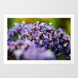 Purple posy Art Print