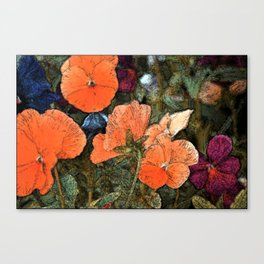 Pansy 10 Canvas Print