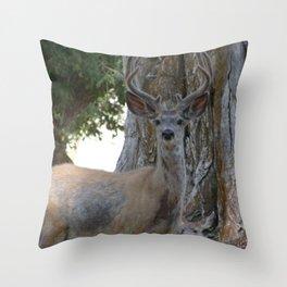 Mule-tail Deer, Buck in Velvet Throw Pillow