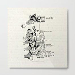 Vintage Anatomy Illustration of the Thoracic vertebrae Metal Print