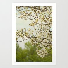 Dogwood Breeze Art Print