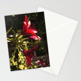 Red Lilys Stationery Cards