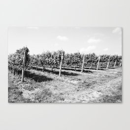 Field of Grapes Canvas Print