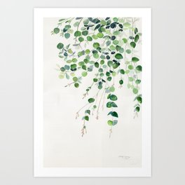 Eucalyptus Watercolor Art Print
