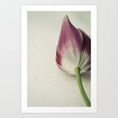 Snow Tulip Art Print