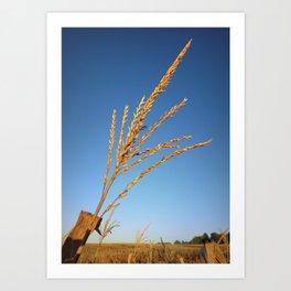 Corn Tassel Art Print