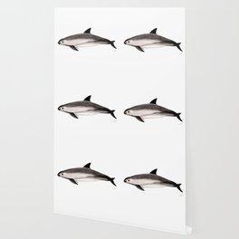 Vaquita Wallpaper