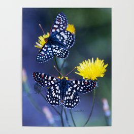 The Checkerspot Couple Poster