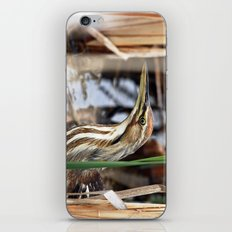 American Bittern - Take Two iPhone & iPod Skin