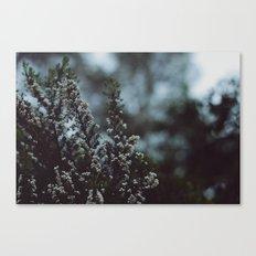 like winter Canvas Print